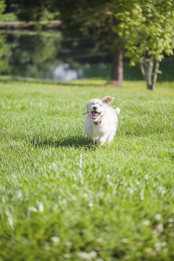 cute puppy running on grass