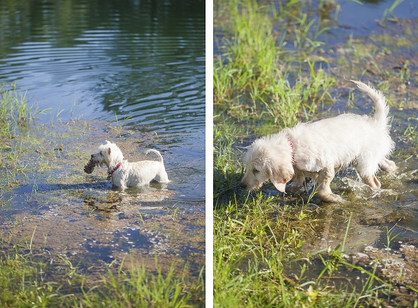 lifestyle puppy photos-Chewie and Molly in creek