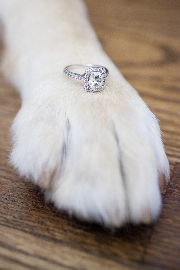 Engagement ring on dog paw