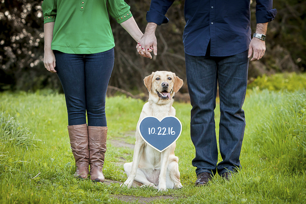 Yellow Labrador wearing heart shaped Save-the-Date- sign,