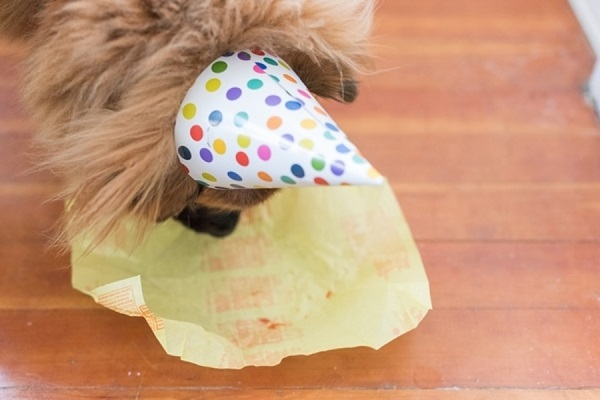 katie-lindgren-dog-birthday-hat-cheeseburger-wrapper