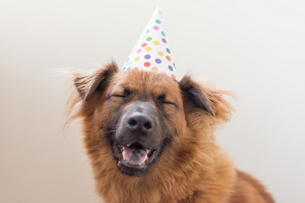 katie-lindgren-laughing-birthday-dog