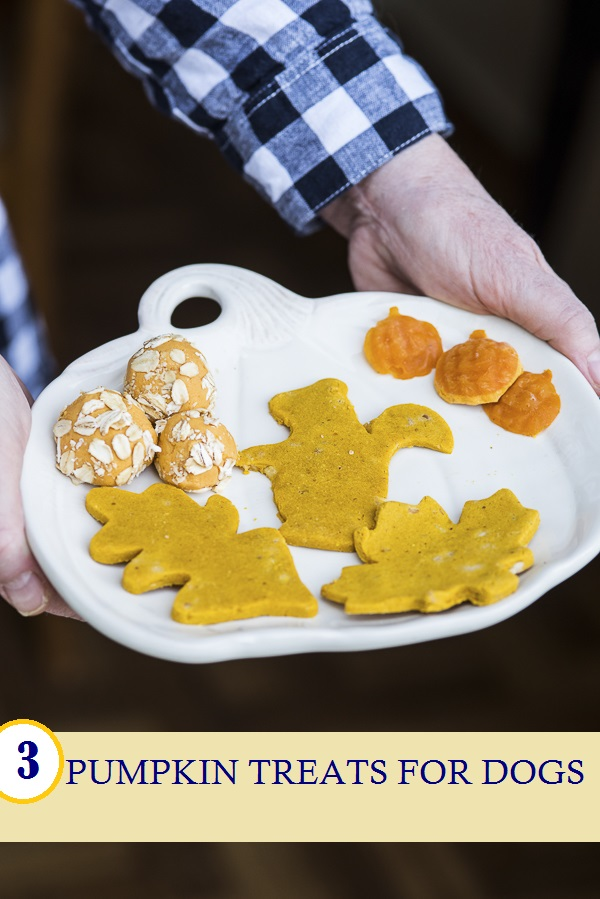 homemade pumpkin treats for dogs on white pumpkin plate , Daily Dog Tag - Fall Treats for Dogs