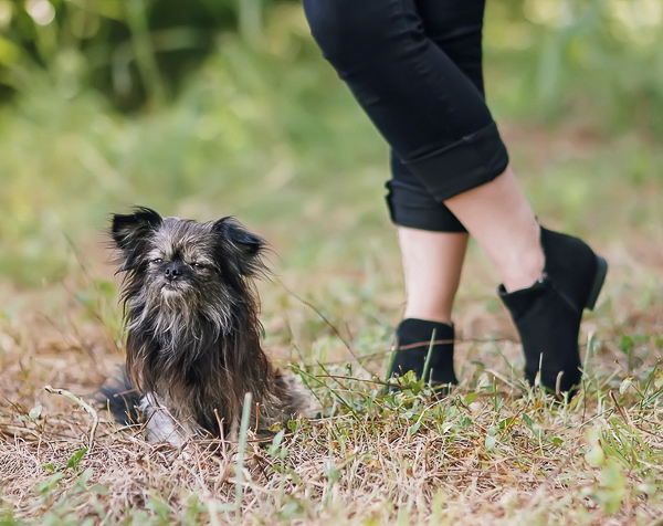 small Chihuahua mix sitting next to senior girl in black booties, anjeanette-illustration-senior-portraits-with-dog