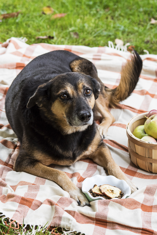 mixed breed lying on blanket next to basket of apples, apple chip food topper