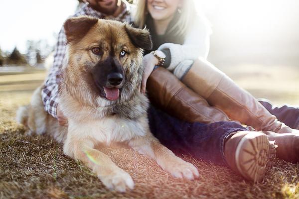 chow-husky-mix, engagement photos with dog