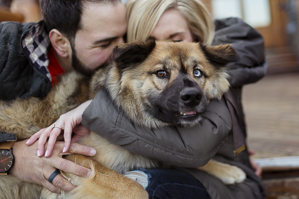 Engaging Tails:  Oakley the Chow/Husky mix