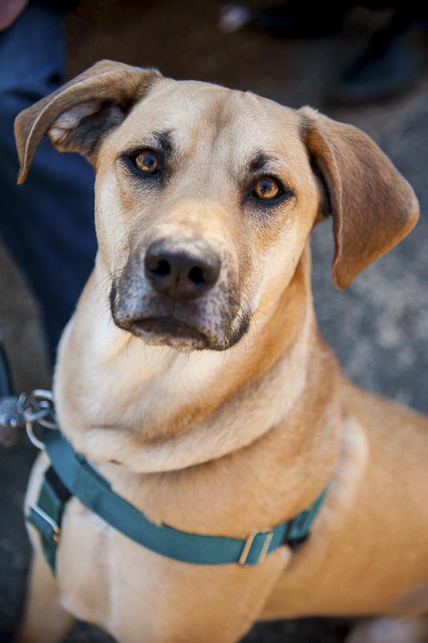 Penelope Dog Rescue