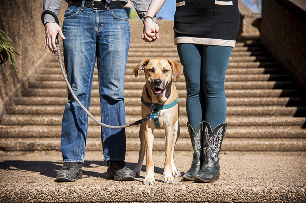dog, couple on steps, engagement pictures with hound mix