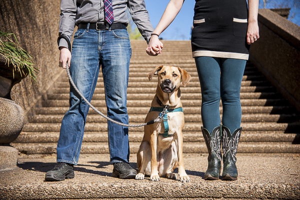 Engaging Tails:  Penelope the Hound mix