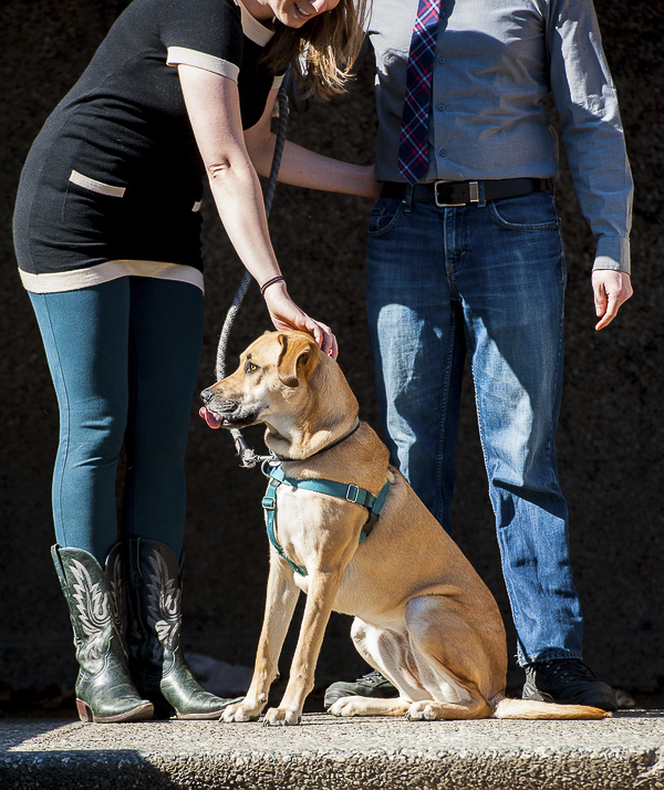 hound mix sitting on step, engagement photos with dog