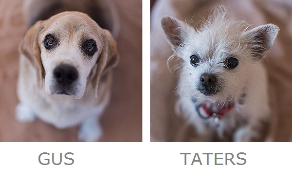 October is A Great Month to Adopt A Shelter Dog
