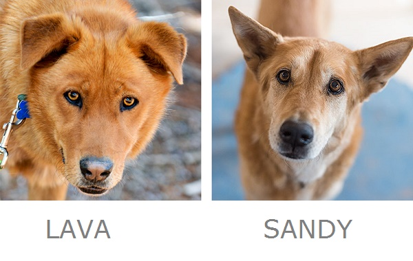 Adoptable dogs | Best Friends
