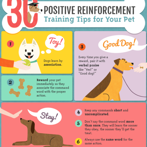 Dog Training Tips: Why Positive Reinforcement Training Is Best