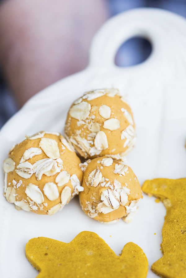 Pumpkin Oatmeal treats for dogs, Daily Dog Tag - Fall Treats for Dogs