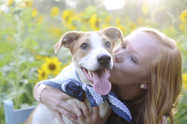 strawberry blonde girl kissing dog in sunflower patch, senior portraits with dogs