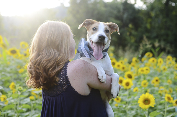 high school senior holding dog in sunflowers
