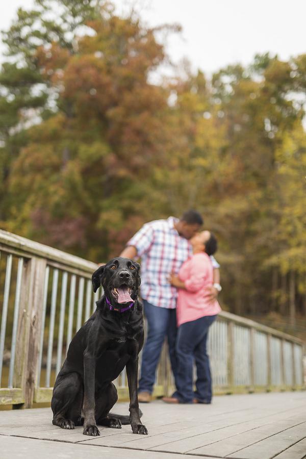 black dog and engaged couple, engagement photos with dog
