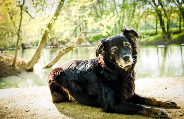 Australian Shepherd Mix lying near water's edge, on location dog portraits
