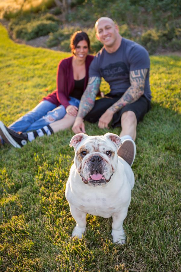 Couple sitting outside,white English Bulldog, engagement pictures with English Bulldog