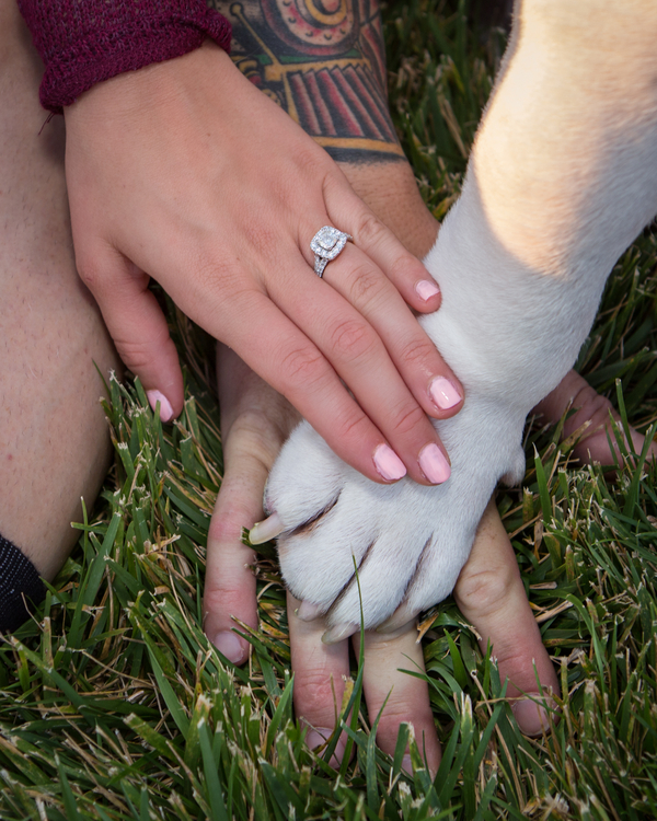 engagement photos, hands and paws, engagement ring