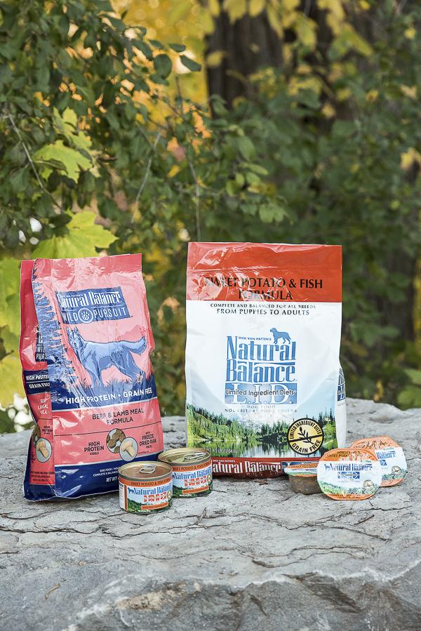 choosing a dog food webelieveinnb   daily dog tagdaily