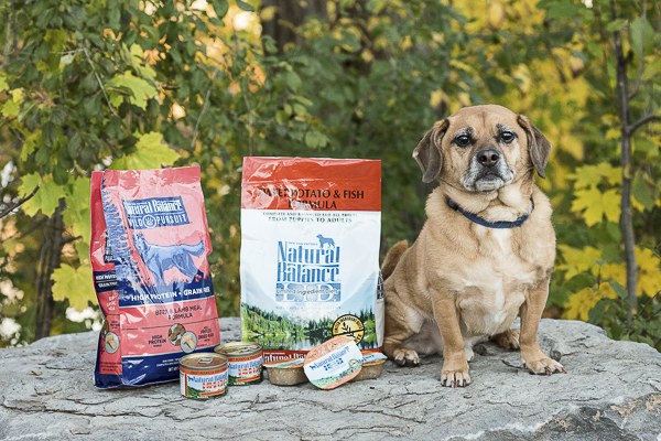 How Healthy Is Your Dog's Food?  #WeBelieveInNB