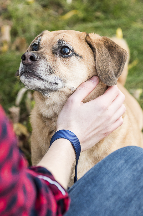 natural-balance-daily-dog-tag, #WeBelieveInNB, Puggle looking at college student