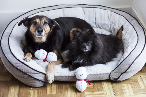 big dog, little dog in bed with simple snowman dog toys, #PAWsomeGifts #ClausAndPaws
