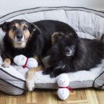 Daily Dog Tag - DIY Dog Toy and Pedigree Dog Treats