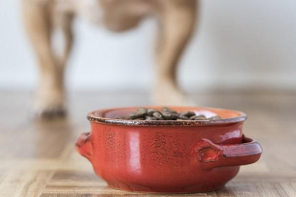 bow legged dog, red bowl of dog food