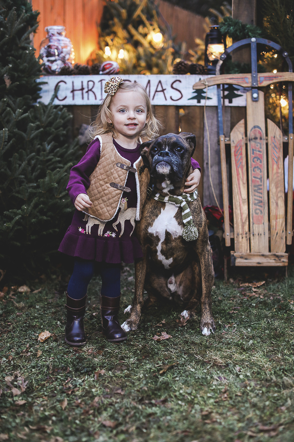 little girl and Boxer, jasmine-rose-photography-christmas-card-photos-14