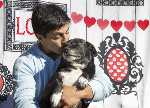 man's best friend, man kissing Lab-Terrier mutt, senior dog