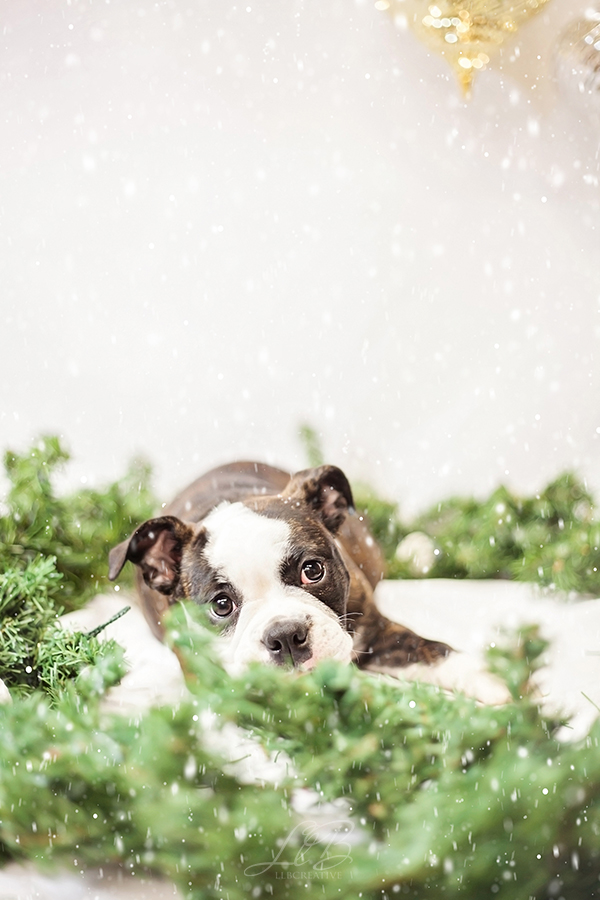 toronto-dog-photographer-sit-with-me-rescue-, adorable puppy photo, Pawsh Magazine