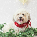 toronto-dog-photographer-sit-with-me-rescue-5083