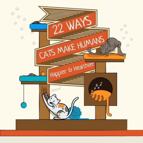 Caturday:  22 Ways Cats Make Life Better
