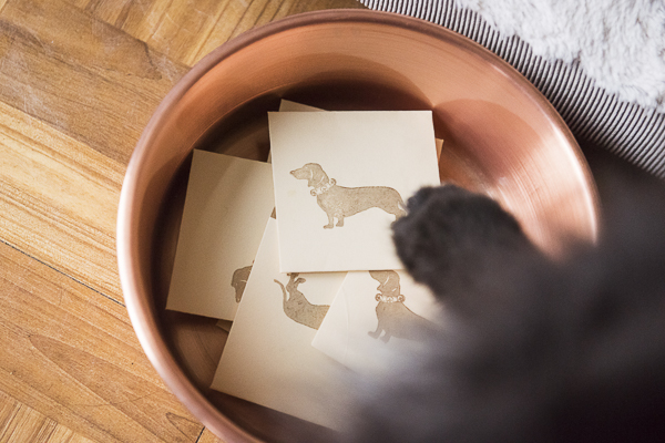 dog paw picking winner out of copper bowl