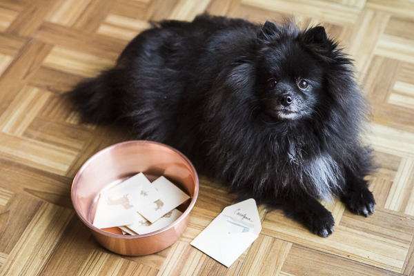Pomeranian with winning ballot