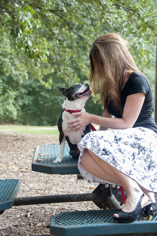 Boston Terrier looking at woman,