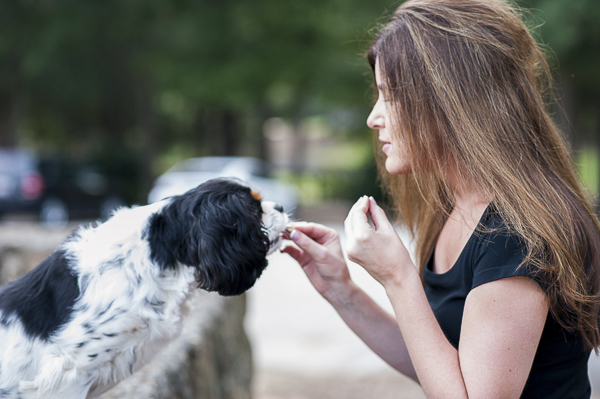 woman feeding spaniel a treat