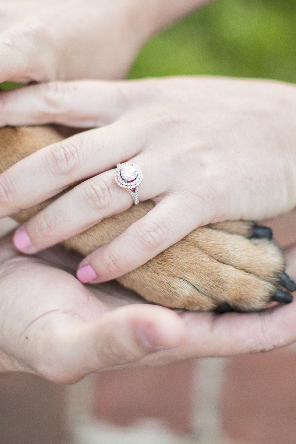 paw and hands, engagement photo