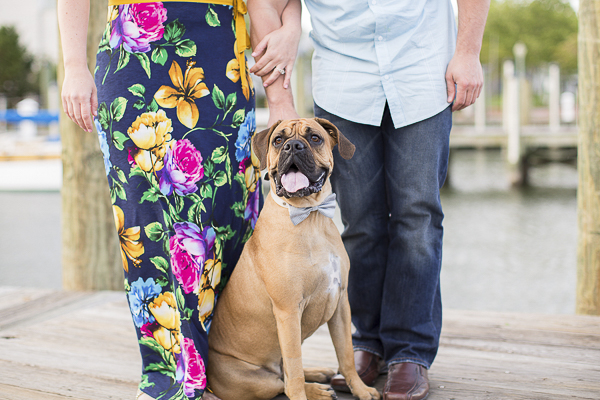 handsome dog in bow tie, engagement photos, Annapolis