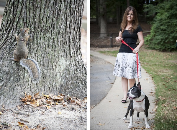 woman walking Boston Terrier, squirrel on tree trunk