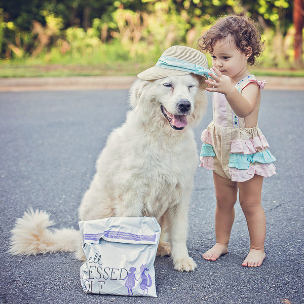 toddler putting hat on Great Pyrenees mix