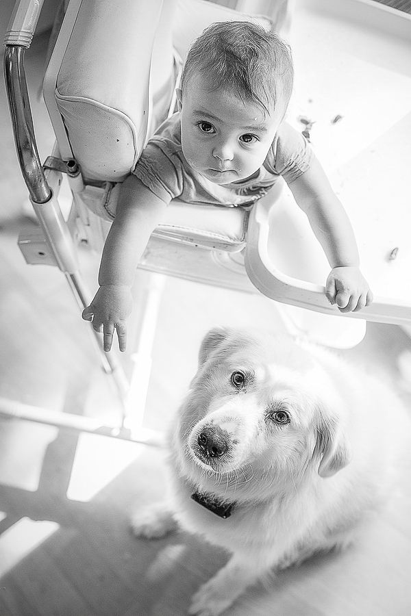 baby in high chair, Pyr mix sitting under tray, documentary dog photographer