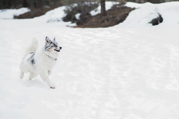 Aussie running in snow
