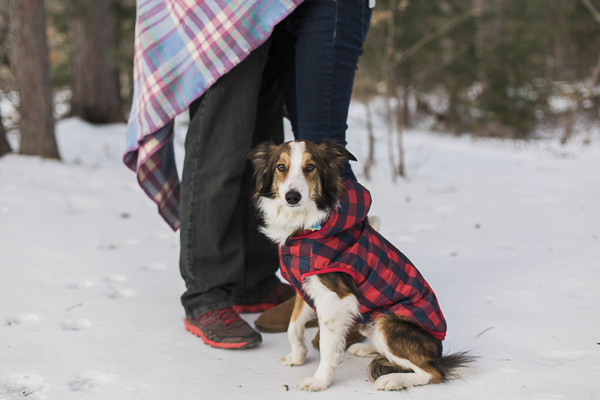 dog wearing red buffalo check jacket sitting in snow, engagement photos with dog