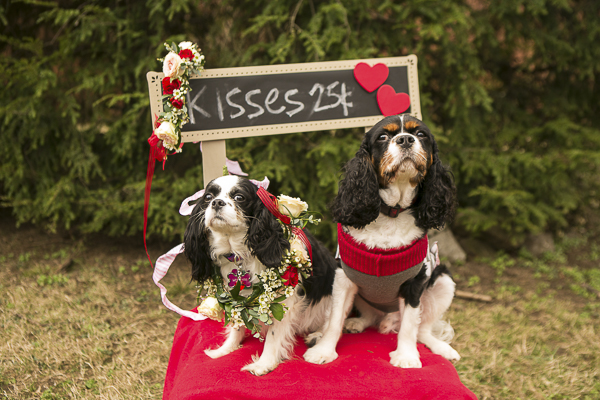 Valentine's Day party for dogs, King Charles Spaniel, Kissing booth