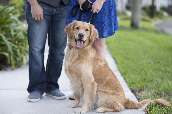 Golden Retriever-engagement photos
