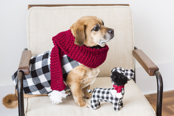 Puggle wearing red scarf and buffalo plaid jacket, twinning with checked dog toy